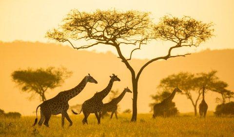ЮАР открытие границ