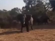 В ЮАР слон напал на машину туристов
